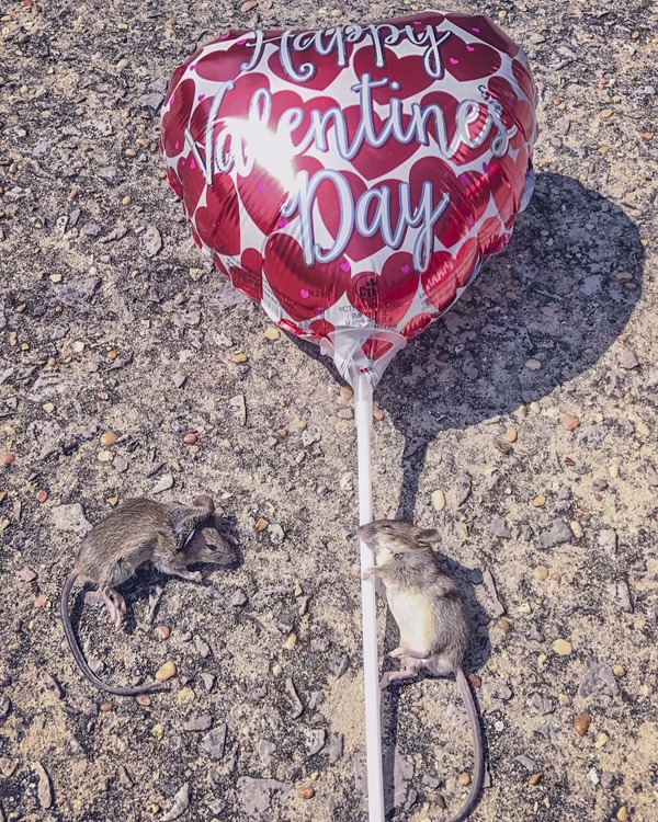Herman and Marge the Valentine Mice s