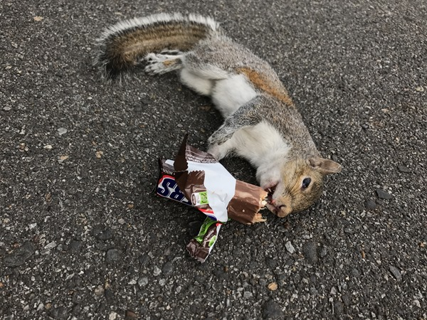 Snickers the Squirrel