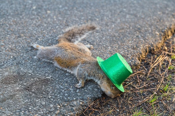 St-Patty-the-Squirrel