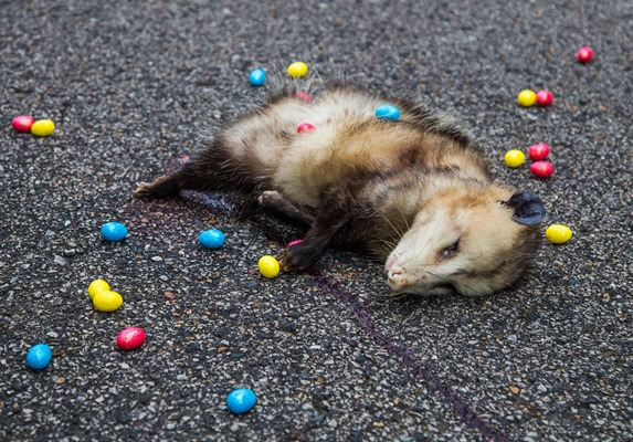 Alabama-Easter-Possum