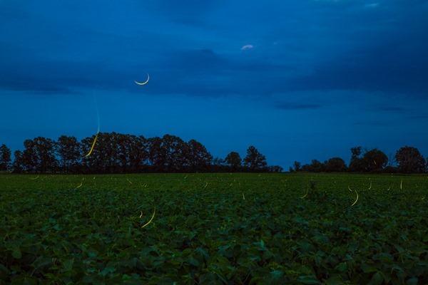 170701b-Fireflies-in-Michigan s