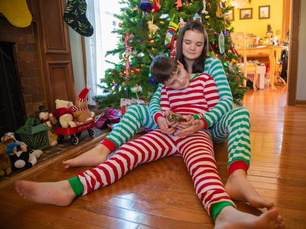Buddy The Snake 2019 christmas photos remake 2M7A0878 small